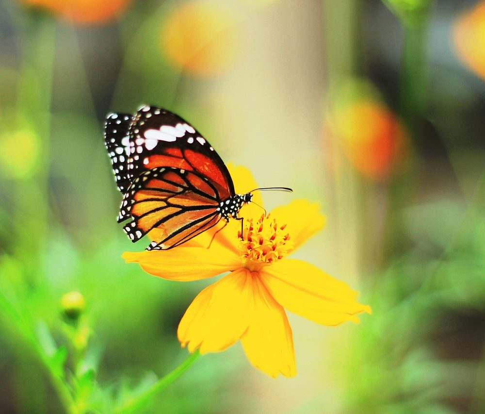 butterfly-804695_1280