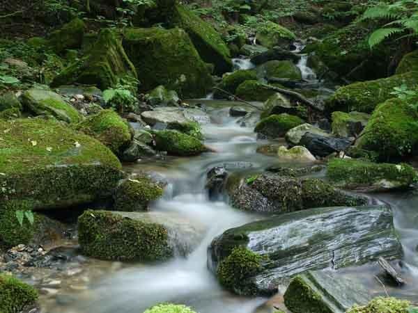 600 creek